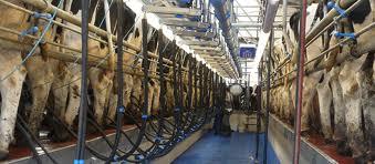 Dairymaster_Swing2