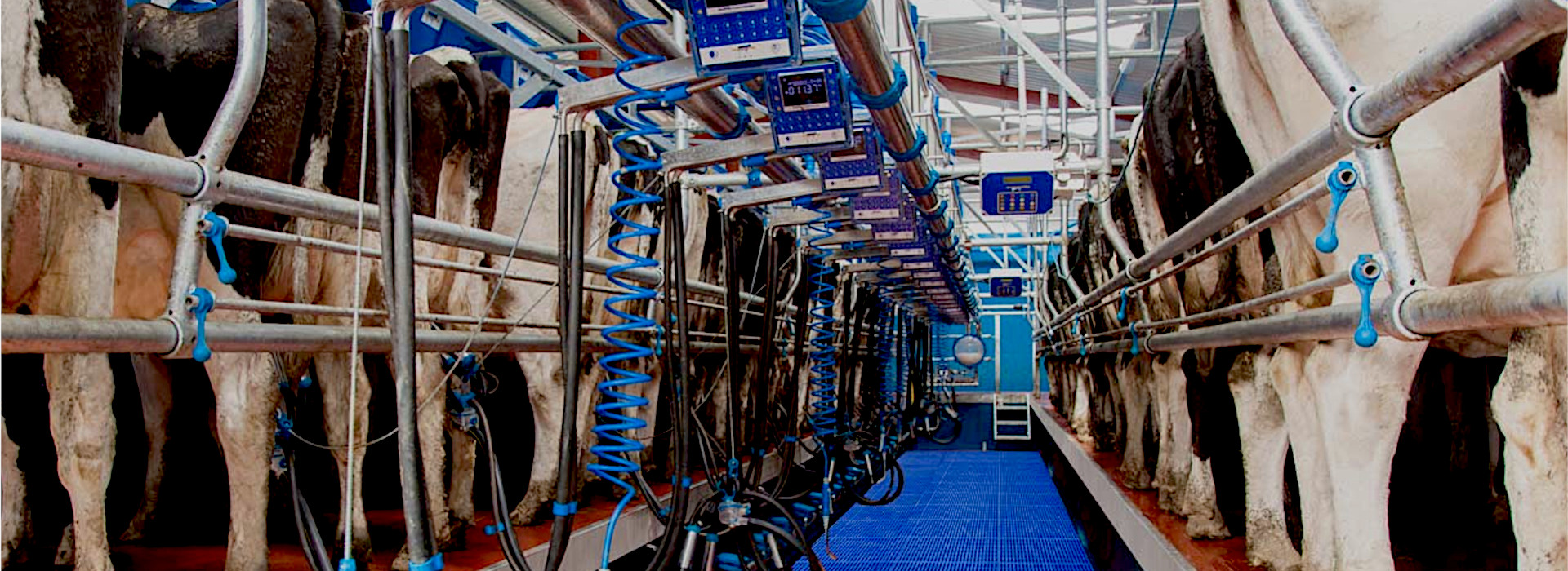 Dairymaster swing-over3
